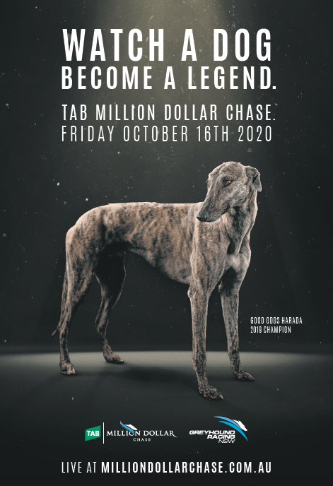 Greyhound Racing creative campaign